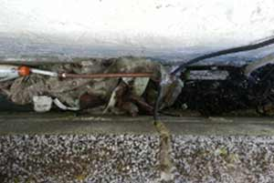 Check that there is no debris in your cavity bridging your damp proof course