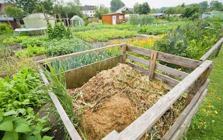 Well established compost heap
