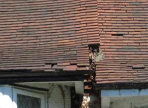 Inspect your roof for missing and broken tiles