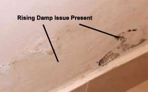 Evident rising damp issues appearing just above skirting board