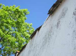 Change broken roof tiles immediately to stop water entering