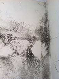 Condensation can cause black mould growth
