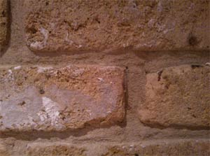 Remove one or two bricks from your wall to examine the cavity for debris