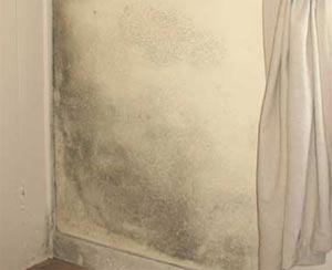 Damp encourages mould growth which can harm your health