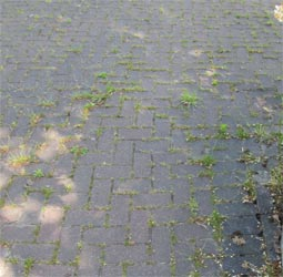 Brick paved driveway with grass growting through