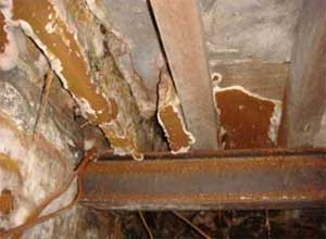 Dry rot can colonise your timber and damage its structure