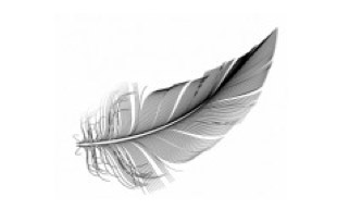 The term feathering out derives from feathers