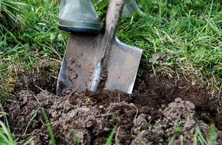 Cut away turf and loosen soil