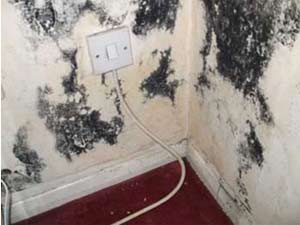 Water coming through your wall can encourage mould growth