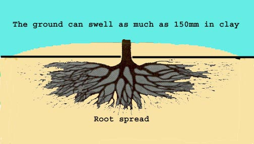 Tree Root Cross Section