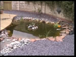 Make sure you have a pump in your new pond to keep you fish healthy