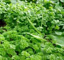 An Example of a Herb Garden