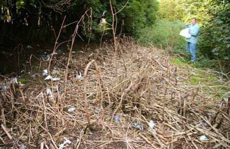 Repeated treatment will kill Japanse Knotweed