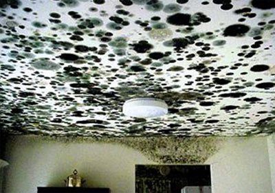 Black Mould On Ceiling And Walls