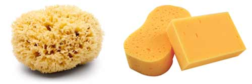 Natural and synthetic sponges used for paint effects