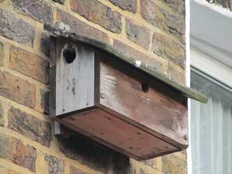 Bird box or nest box with various different size holes