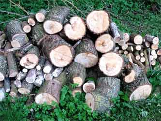 Cut logs left to season in the garden providing bugs and grubs for birds to eat