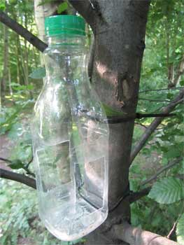 A DIY Bird feeder made from a recycled plastic bottle