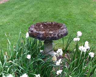 Stone bird table feature