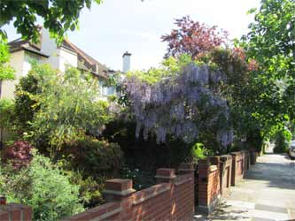 A small front garden with a great range of plants to attract birds