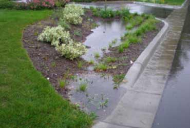 Rain garden collecting runoff
