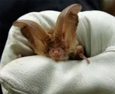 Wildlife and bats are protected