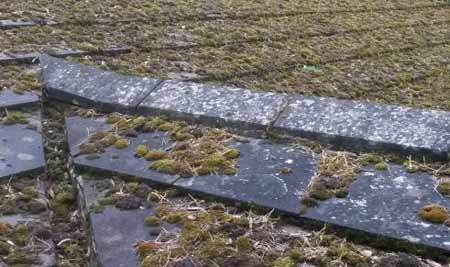 Moss buildup on roof