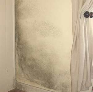 Once you have treated your rising damp, check your walls for mould
