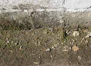 If you do not have a damp proof course or it is bridged or below ground level this could be causing your rising damp problem