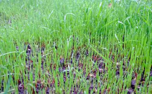 How To Seed A Lawn And Grow Lush