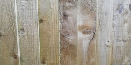 Pressure treated timber fence