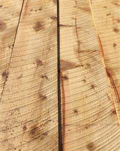 Section of rough cut timber