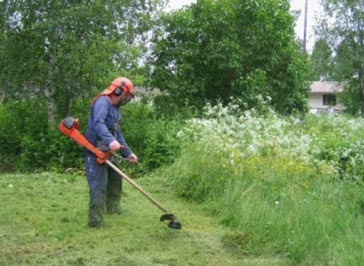 Scything long grass with strimmer
