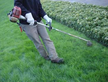 Trimming lawn edge with strimmer