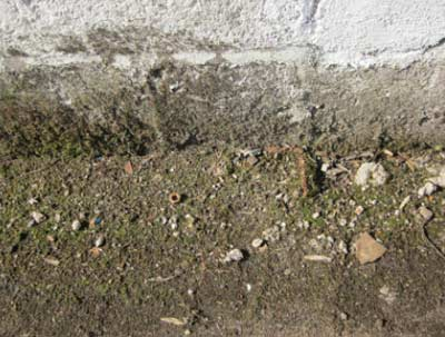 Damp lower section of wall